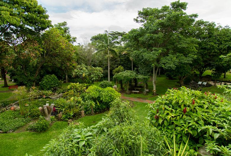 Hotel bougainvillea in Heredia - Garden