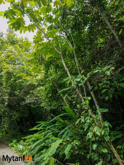 things to know about Costa Rica before you go - sloths