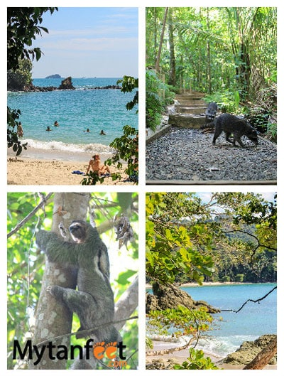 1 week Costa Rica itinerary - things to do in Manuel Antonio