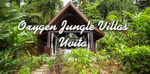 Oxygen Jungle Villas - a romantic adult only hotel in the mountains of Uvita