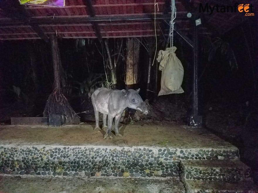 Rainforest Adventures Costa Rica Atlantic - tapir