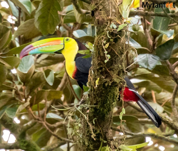 Arenal Volcano National Park animals