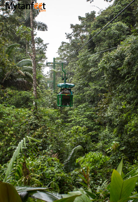 day trips from san jose, costa rica - aerial tram rainforest adventures