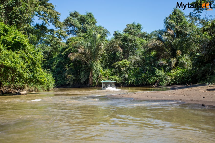 costa rica monkey tours - coast to coast tortuguero