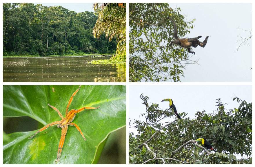 costa rica monkey tours - tortuguero coast to coast