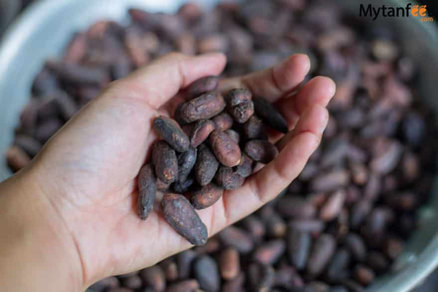 things to do in costa rica -Chocolate tour