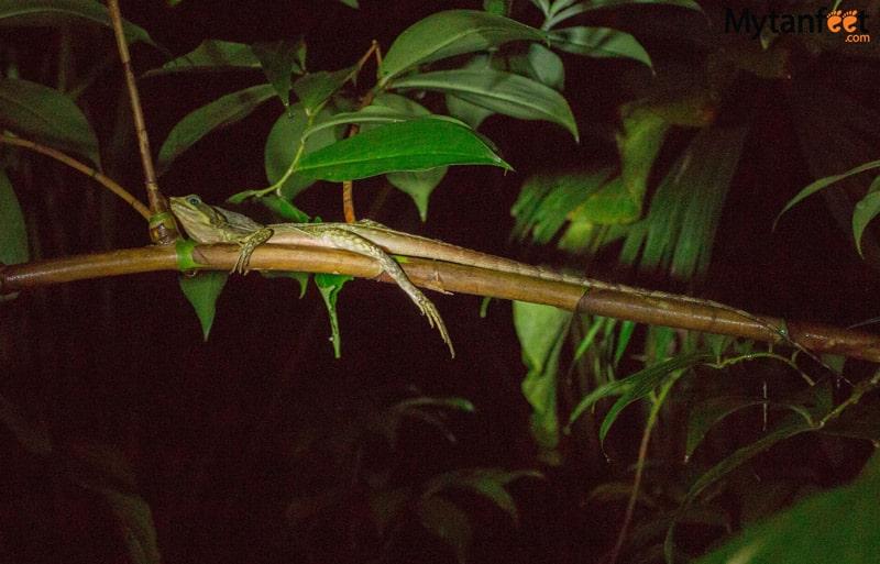 things to do in costa rica -Night walk