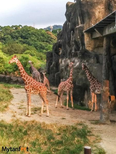 Things to do in Taipei, Taiwan - Taipei Zoo