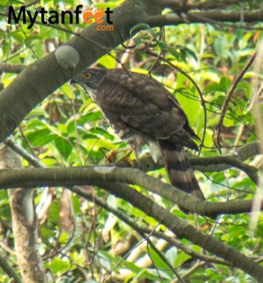 things to do in Taipei - Guandu Park for birds