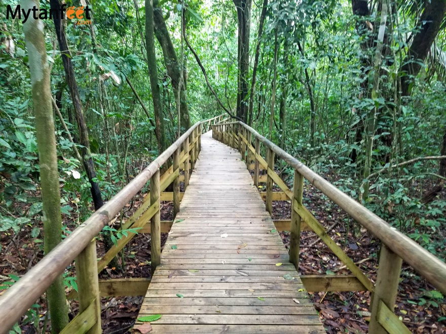 things to do in Manuel Antonio - hike the national park