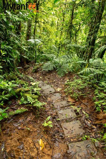 Children's Eternal Rainforest Pocosol station