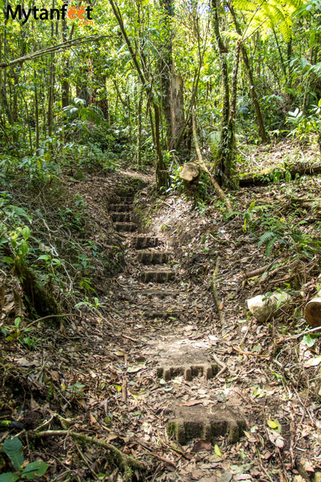 Hiking Monteverde Cloud Forest Reserve - roble