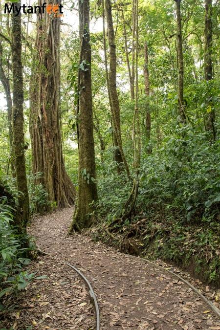 Hiking Monteverde Cloud Forest Reserve - sendero guindon