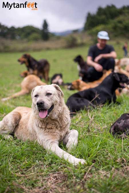 Territorio de Zaguates dogs