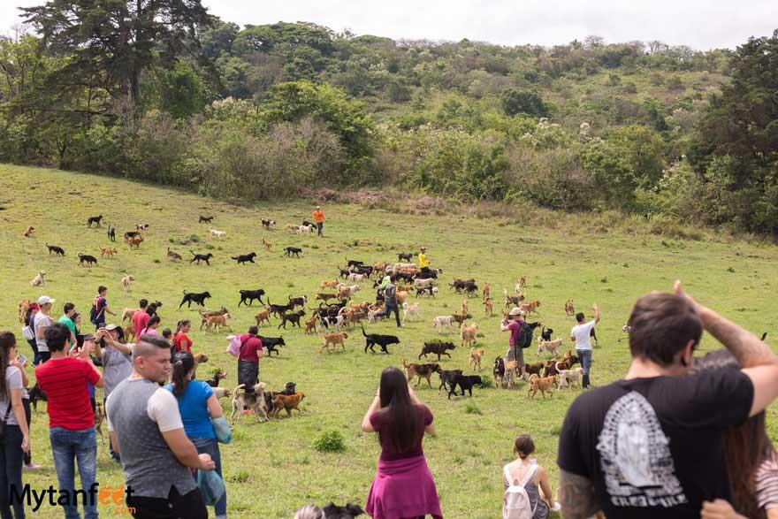 Territorio de Zaguates running with dogs