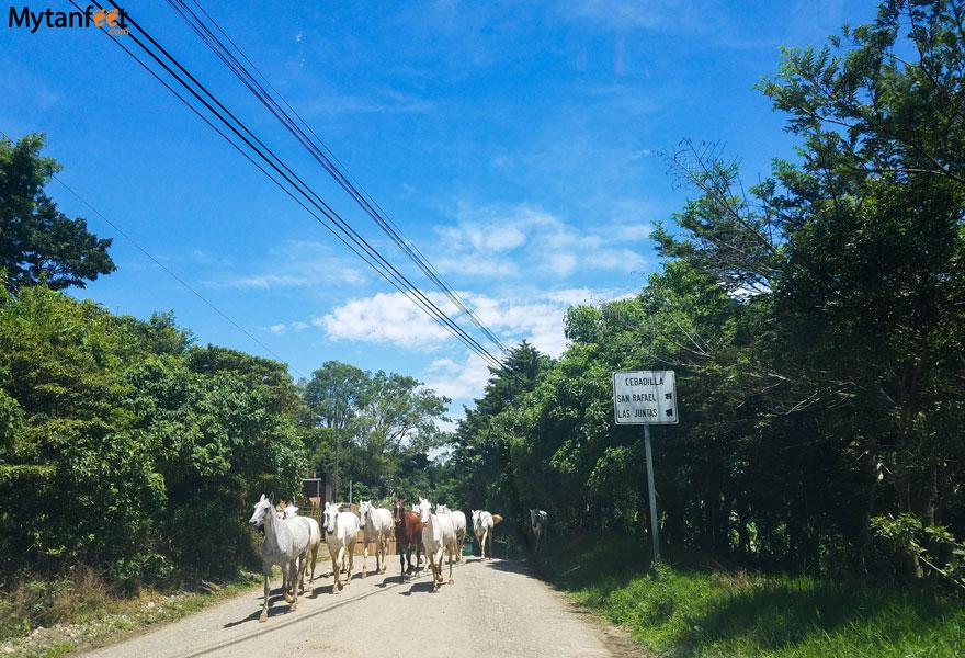 Monteverde road conditions - las juntas