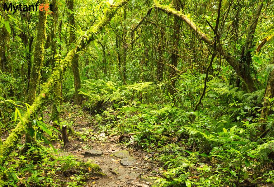 The Santa Elena Cloud Forest Reserves - Children's Eternal Rain Forest, Monteverde and Santa Elena Cloud Forest Reserve