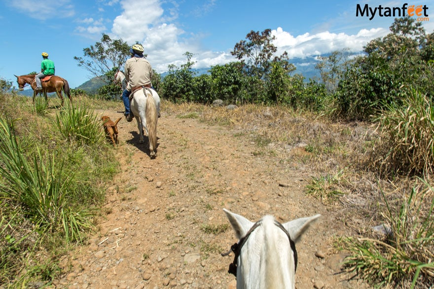 horseback riding in turrialba through sugar cane and with the dogs