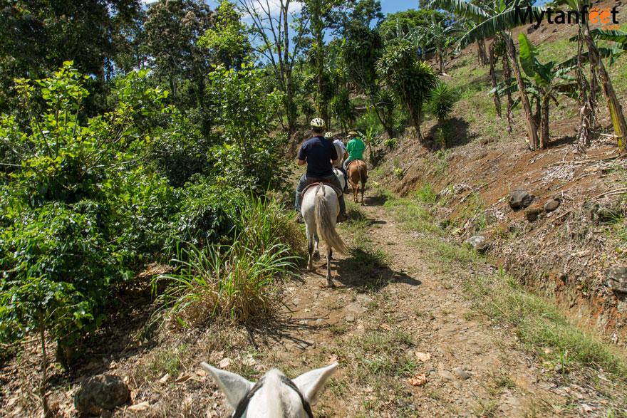 horseback riding in turrialba through sugar cane