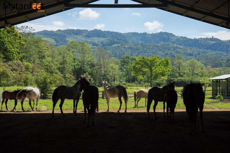 horseback riding in turrialba