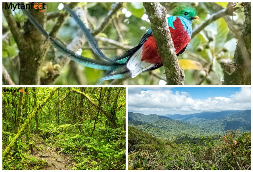 Two weeks in costa rica itinerary - monteverde