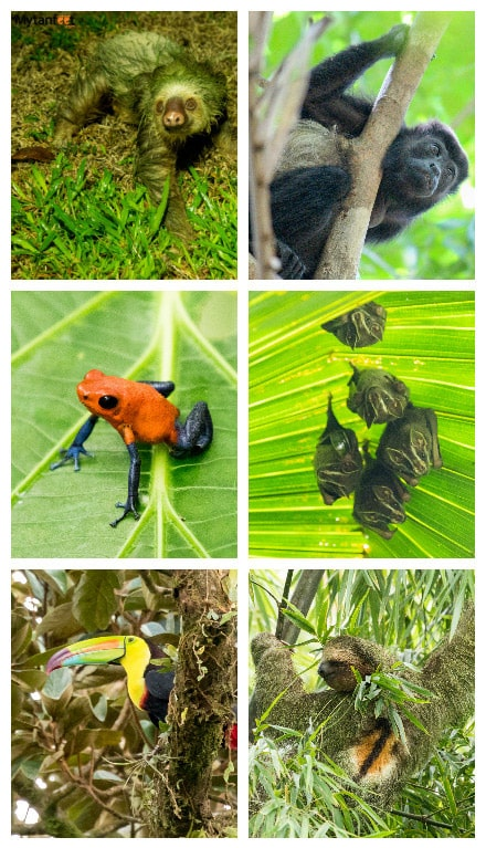 monteverde or arenal - arenal wildlife