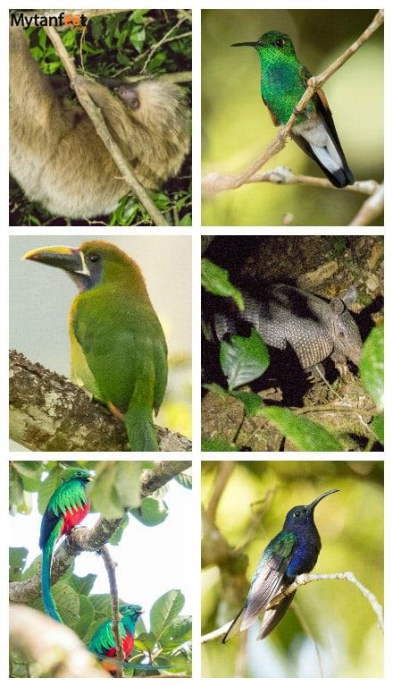monteverde or arenal - monteverde wildlife