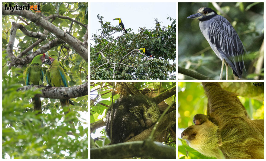 two weeks in costa rica itinerary - wildlife in tortuguero