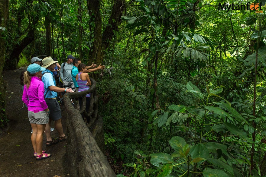 Mistico Arenal Hanging Bridges - guided tour