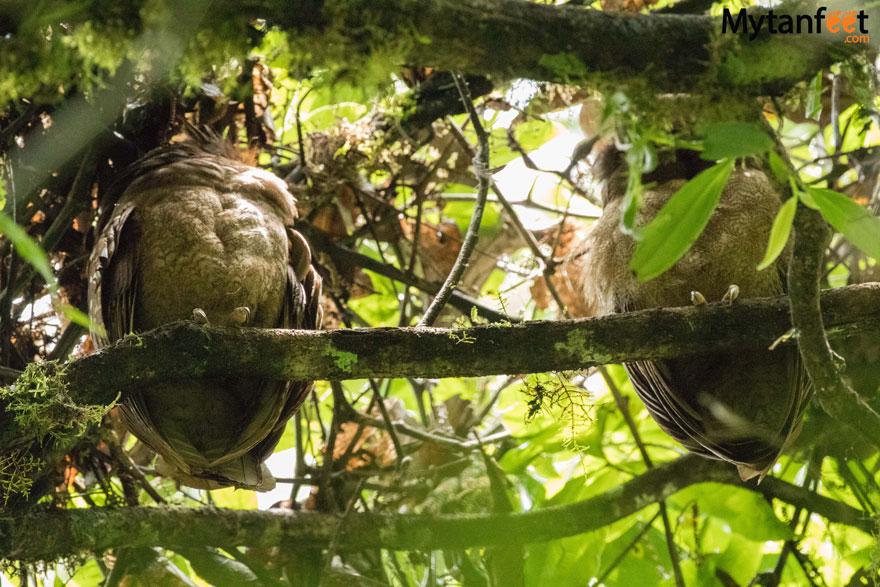 Mistico Arenal Hanging Bridge - owls