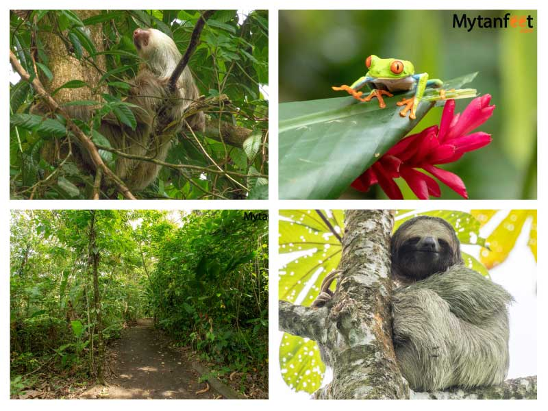 Things to do in La Fortuna - Bogarin trail sloth walk