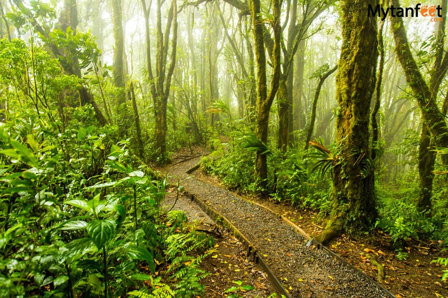 Things to do in Monteverde - Hike Cloud Forest Reserves