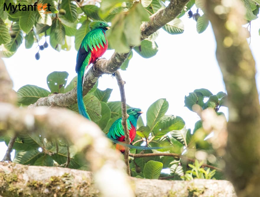 Things to do in Monteverde - See Resplendant Quetzals