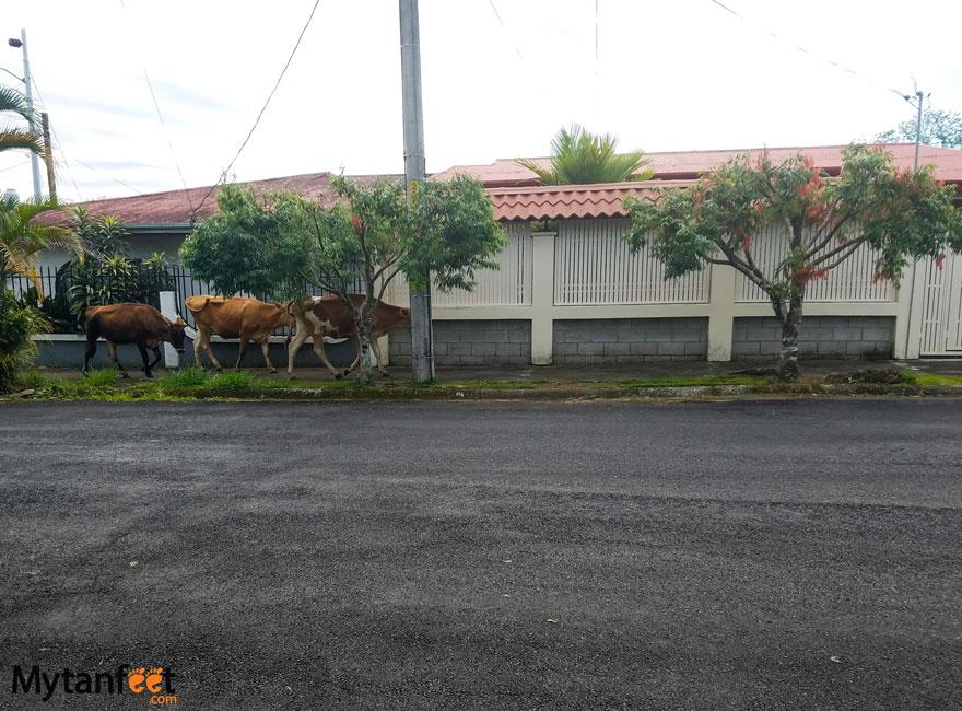 Turrialba Costa Rica city guide