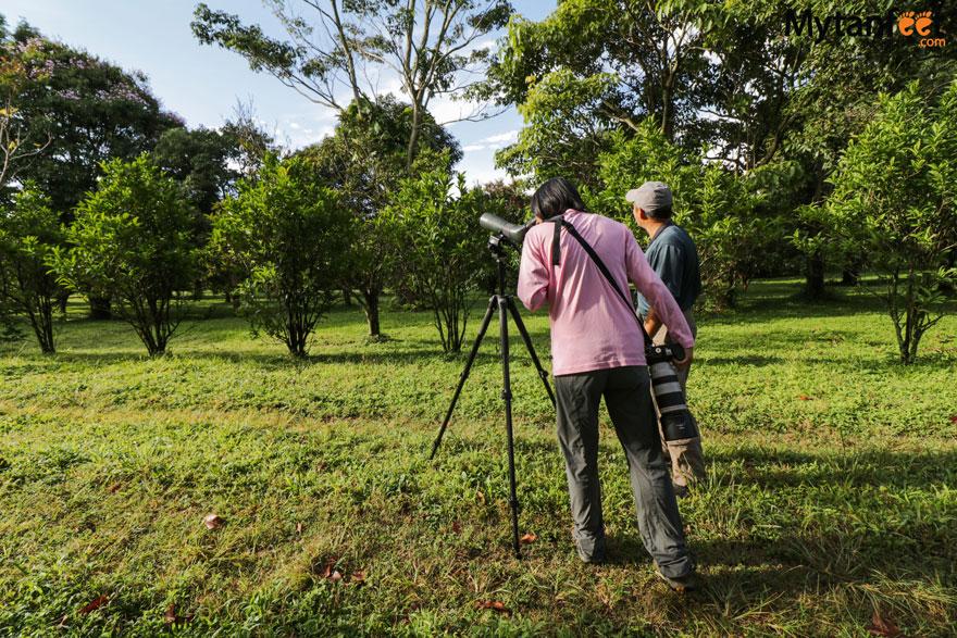 hiring a guide in Costa Rica - bird watching