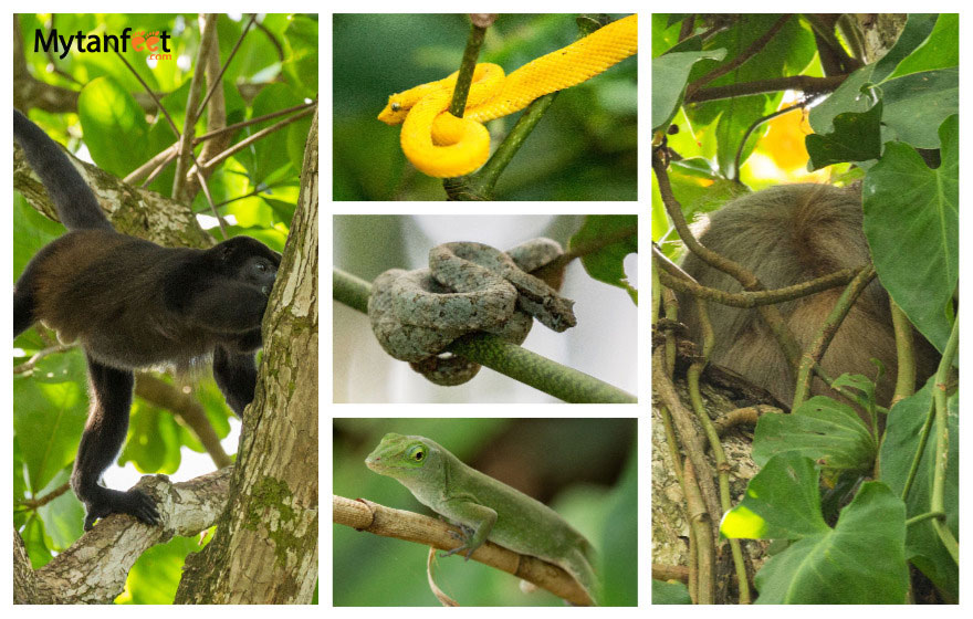 Wildlife at Cahuita