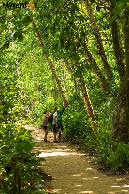Cahuita National Park guided hikes - Cahuita Costa Rica