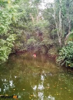 Things to do in Punta Uva - kayaking