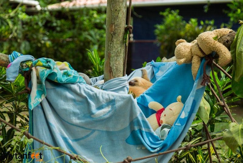 Jaguar Rescue Center Puerto Viejo costa Rica sloth