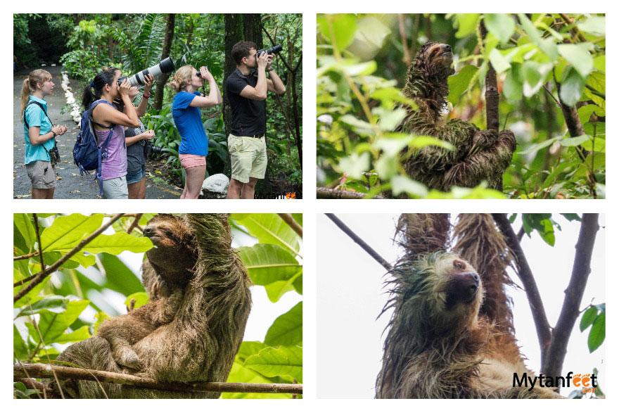 Tulemar Vacation Rentals and Resort - sloth walk