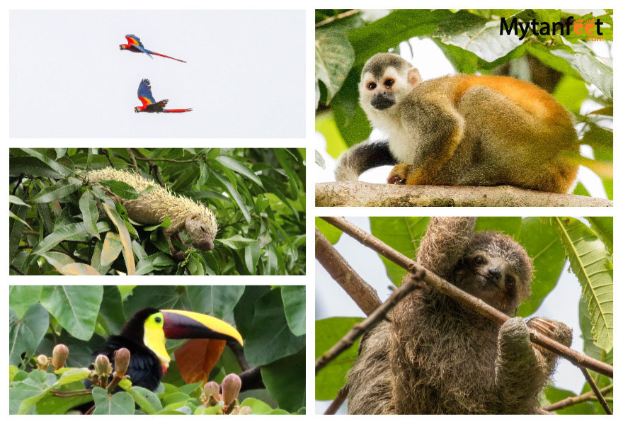 Tulemar vacation rentals and resort - wildlife