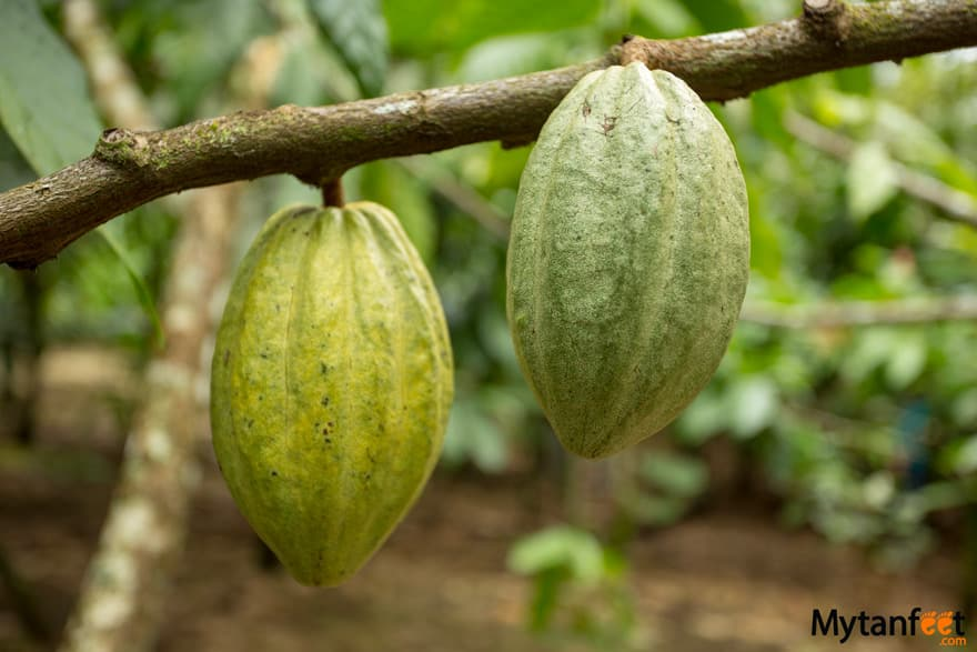 Things to do in Puerto Viejo - Chocolate tour
