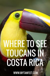 Where to see toucans in Costa Rica