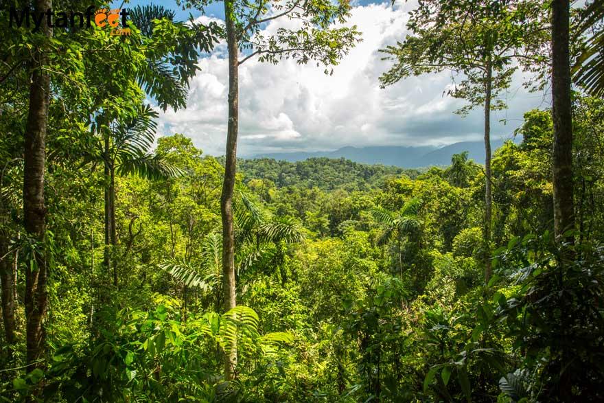 Costa Rica facts - rainforest