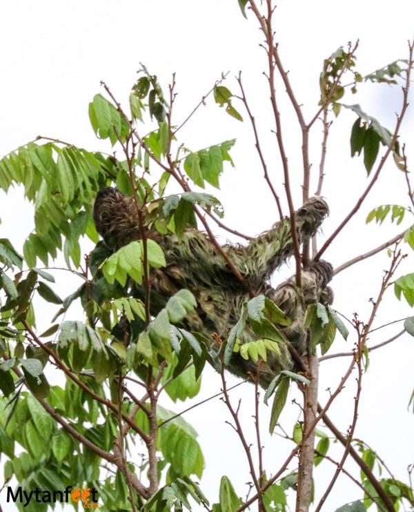 The Sloth Institute - Manuel Antonio sloth walk