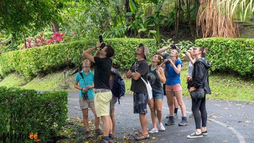 The Sloth Institute - Manuel Antonio sloth walk