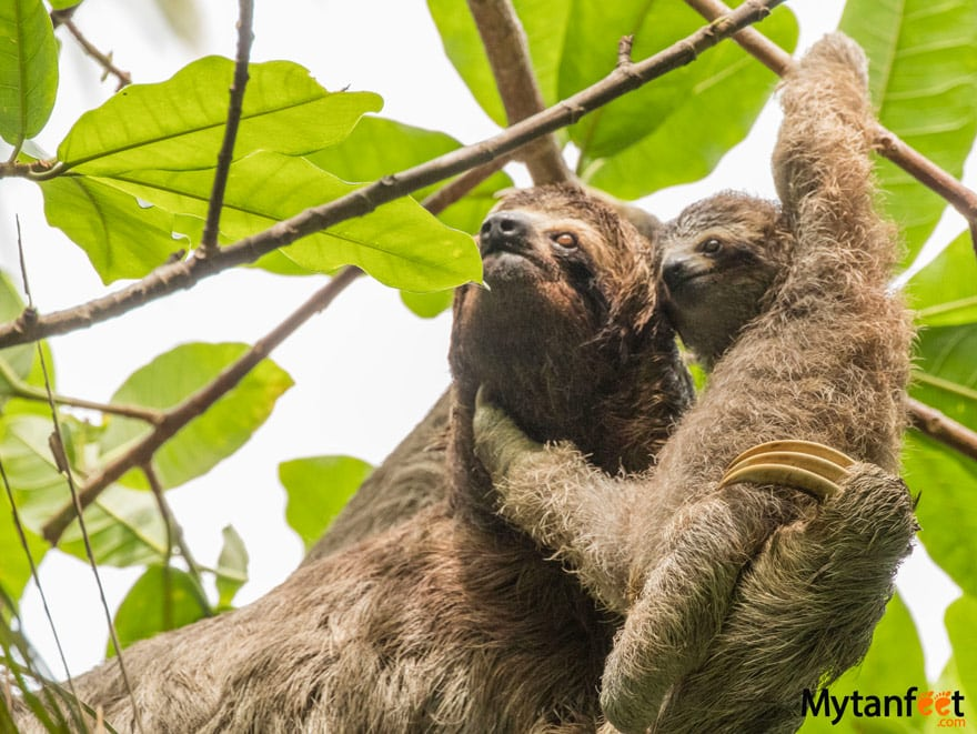 Tulemar The Sloth Institute Manuel Antonio