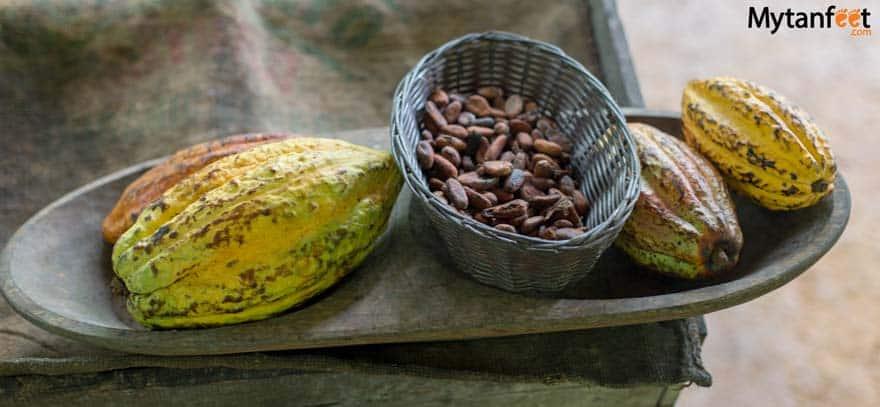 Rainforest Chocolate Tour La Fortuna - cacao fruit