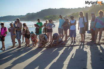 Things to do in Montezuma - releasing baby sea turtles