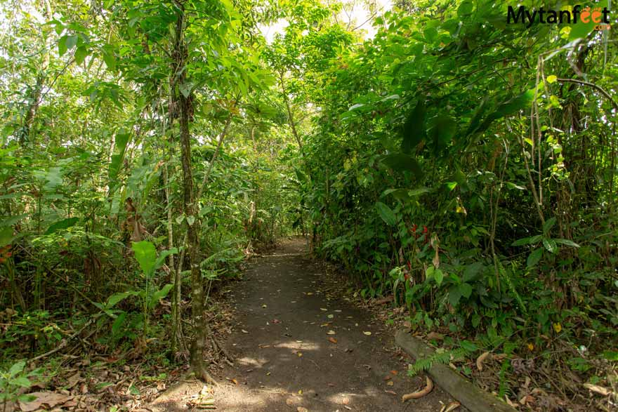 Bogarin Trail - La Fortuna sloth tour